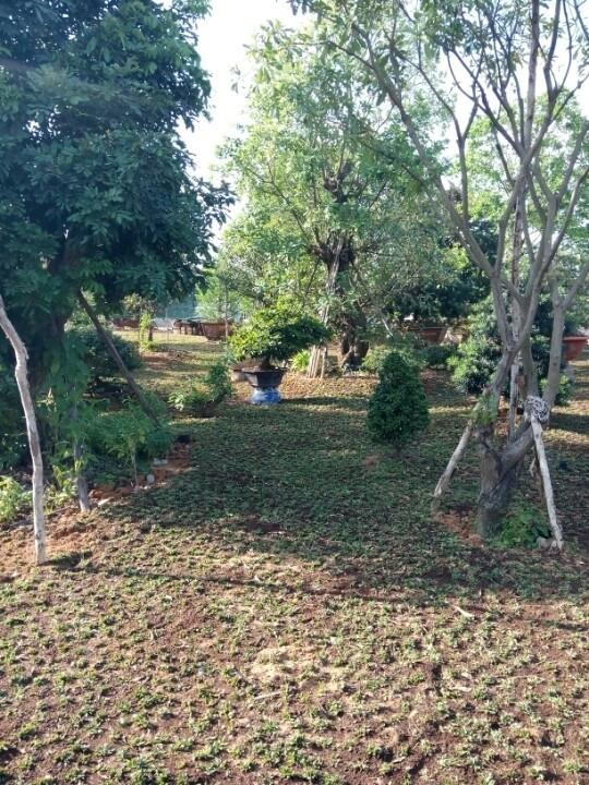 Hệ thống tưới cây tự động của Vinteli Home